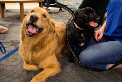 Students de-stress with pups