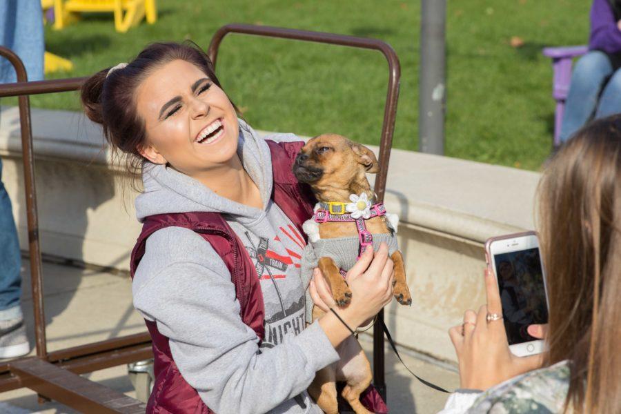 PANTHER PORTRAIT: 2k Dog Walk Benefit
