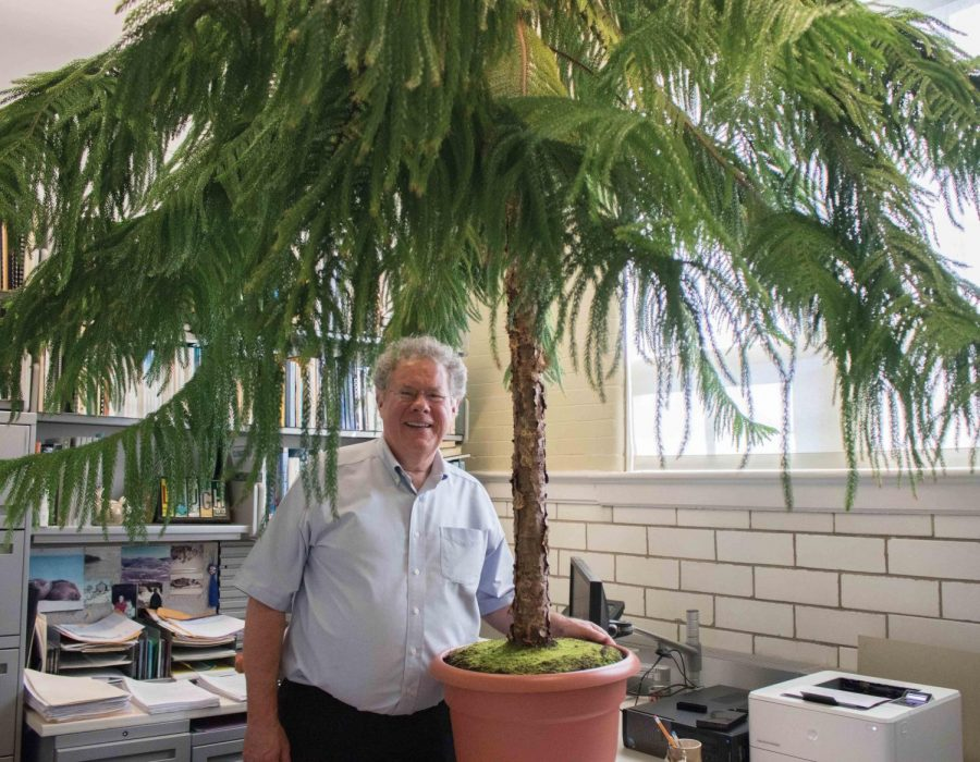 Professor Dave May poses with his eight-foot Norfolk Island Pine tree in his office.